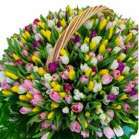 Шикарный букет-ассорти из 301 тюльпана в корзине R016