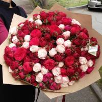 Букет 101 пионовидная роза с упаковкой R036