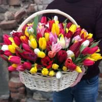 Корзина 79 разноцветных тюльпанов R004