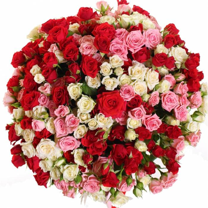 101 роза R008
