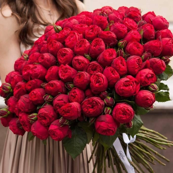 101 роза R001