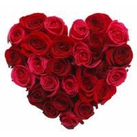 Сердце 21 красная роза R018