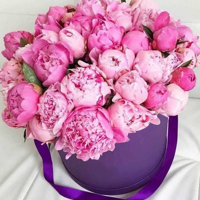 25 розовых крупных пионов в коробке R002